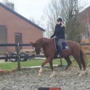 Enthousiaste ruiter zoekt paard voor Orun/Bijrijdpaard