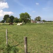 fijn plekje voor lieve sociale pony