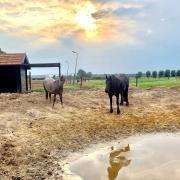 GEZOCHT: Lieve stevige brede merrie, E-pony of klein paardje