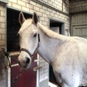 E pony te koop aangeboden