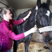 Paarden Sportmassage met 25 % korting