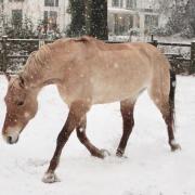 Paard laten scheren omgeving Haarlem of Amersfoort!