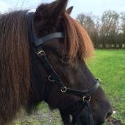 Horseware Multi Micklem zwart Cob