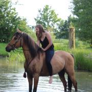 Verzorger/bijrijder aangeboden, verzorgpony/paard gezocht