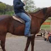 Quarter horse ruin