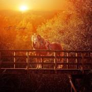 Gezocht ervaren gezellige bijrijdster voor super lieve pony