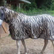 Zebra Vliegendeken EJ maat 195 met hals