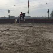Bijrijder aangeboden- Trainings- / lease paard gezocht