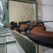 Bijrijdster/leaser voor uw paard aangeboden