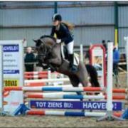 Trainen, doorrijden en uitbrengen van pony's