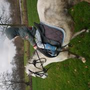 Kinderpony voor jong en oud. C pony!