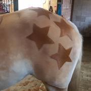 Uw paard of pony professioneel geschoren
