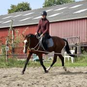 E pony