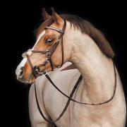 Professioneel scheren van uw paard/pony