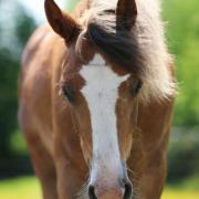Leuke d pony te koop!