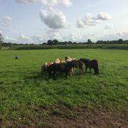 agrarische grond/stalling/eigen weide gezocht