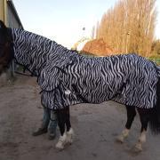 Vliegendeken zebra met loose hals