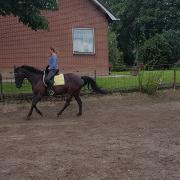 Leuk allround recreatiepaard zoekt nieuw huisje.