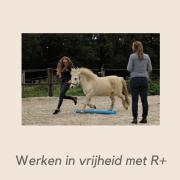 Samen met je paard les in positieve bekrachtiging