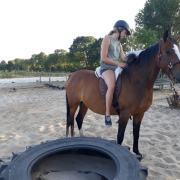 7 jarige Welsh K (E pony) merrie te lease met optie tot koop