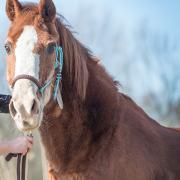 Verzorger / recreatierijder gezocht voor mijn lieve pony.
