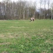 Direct Plek | Gezocht: B/C/D/E Pony