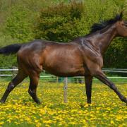 Bijrijder / verzorgster paard