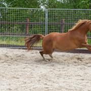 Stagiair communicatie met paardeninteresse gezocht