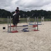 Bruikleen paarden/ pony's gezocht