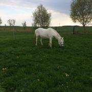 Gezocht: Stalling voor d-pony in een paddock