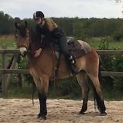 Wil jij (bijna) je eigen paard?