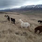 Hulp gezocht met trainen van paarden in Noord-IJsland