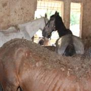 Doneeractie Paard in Nood Spanje!