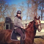 Te koop, 2 recreatie paarden