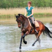 bijrijdster gezocht omgeving schiedam-Delft-rotterdam