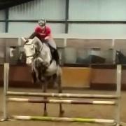 Braaf allround sportpaard