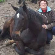 Workshop met paard voor ouder en hooggevoelig kind