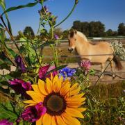 Eetbare bloemenzaden voor paarden