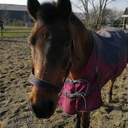 De allerliefste kindvriendelijke oma pony