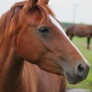 Lieve D pony te koop