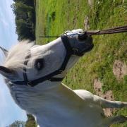 Rambo Micklem Multibridle maat pony