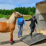 Moeiteloos in je eentje je paard laden!