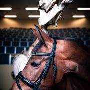 Symposium Paard-en-Wetenschap Universiteitskliniek Paard