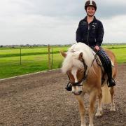 Bruikleen / lease paard of pony gezocht