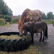Lieve verzorgster gezocht in Bleiswijk