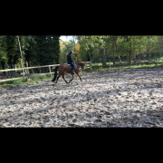 Stoere D pony te koop