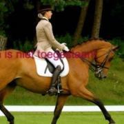 Pikeur Diana jasje beige/bruin maat 38 / 76
