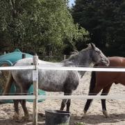 Stalling bij Fair to Horses in Bleiswijk