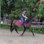Lusitano e pony 5 jaar