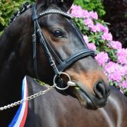 Te koop aangeboden: Prachtige Superbrave D-pony